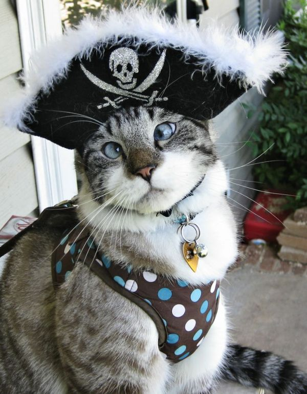 cat pirates
